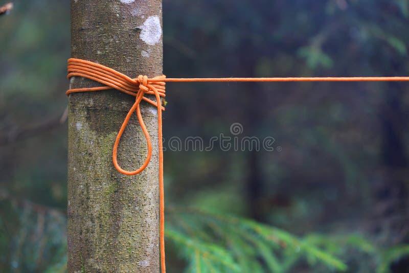 Orange repfnuren på träd arkivfoto