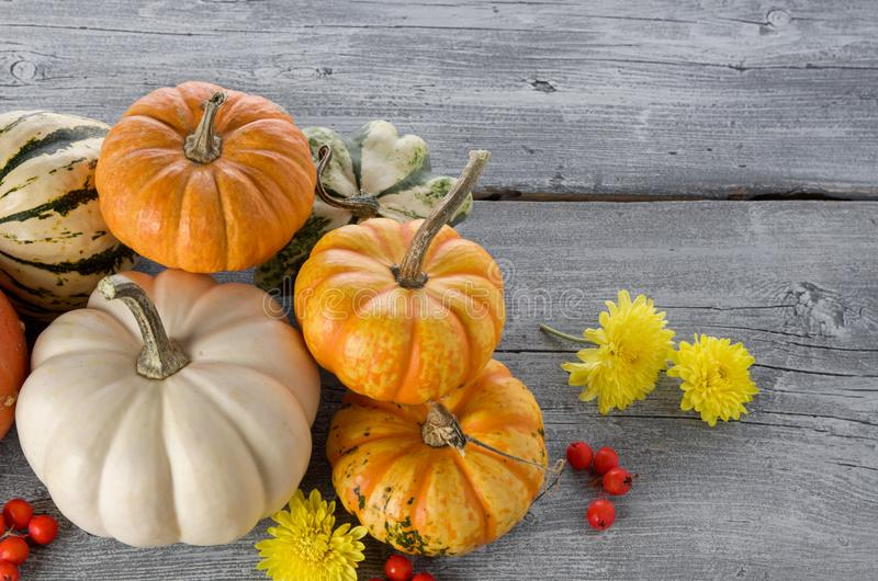 Orange ripe pumpkins on grey wooden table background. Autumn beautiful still life for thanksgiving or Halloween with copy space royalty free stock image