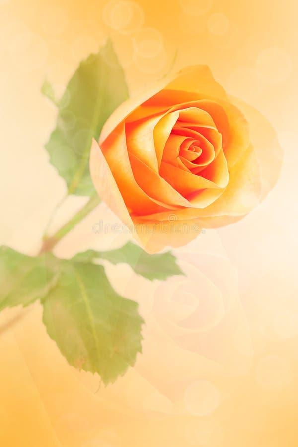 Orange ro med bokeh fotografering för bildbyråer