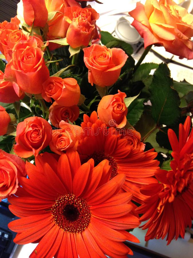 Orange rosafarbene und rote gerberts stockbilder