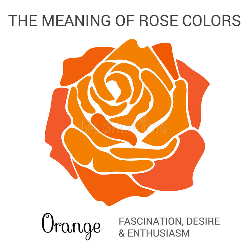 Orange Rose vektor abbildung