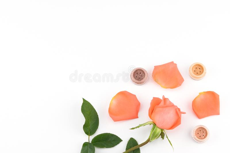 Orange rose and eye shadow with copy space. On white background stock photo