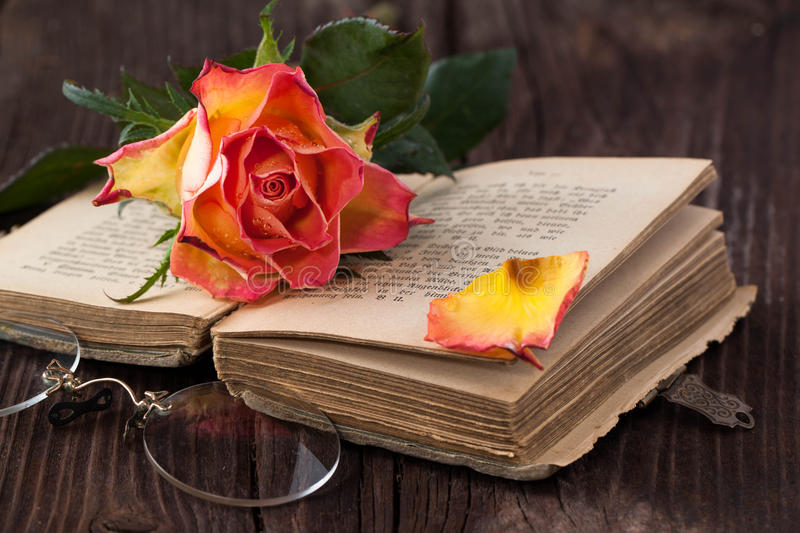 Orange rose with old book and glasses. Wet orange rose on old brown wooden table with old bible book and vintage glasses stock images