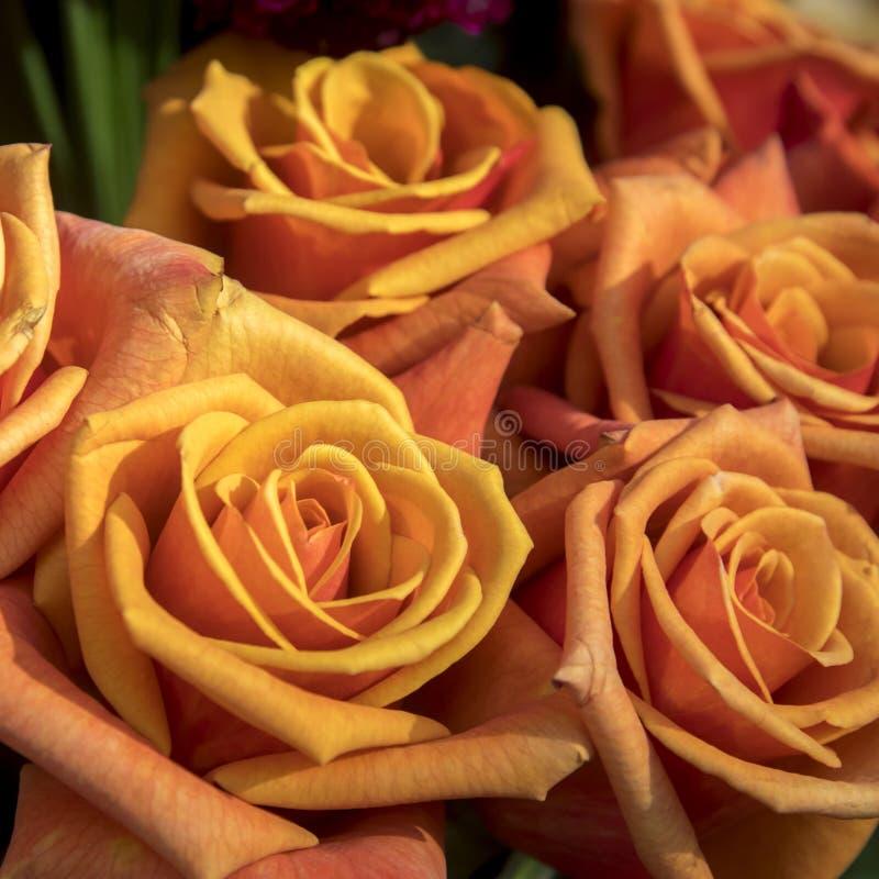 Orange Rosen im Blumenstrauß als schönen Hintergrund stockfoto