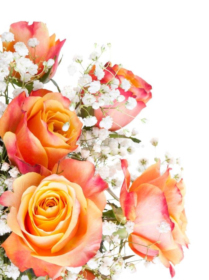 Orange Rosen Mit Weißen Blumen Stockbild - Bild von frech, romanze ...
