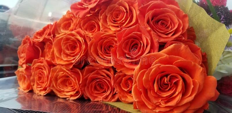 17 orange rosor arkivbild