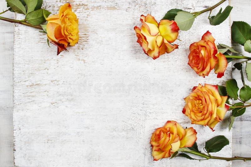Orange rosor på vit träbakgrund royaltyfria bilder