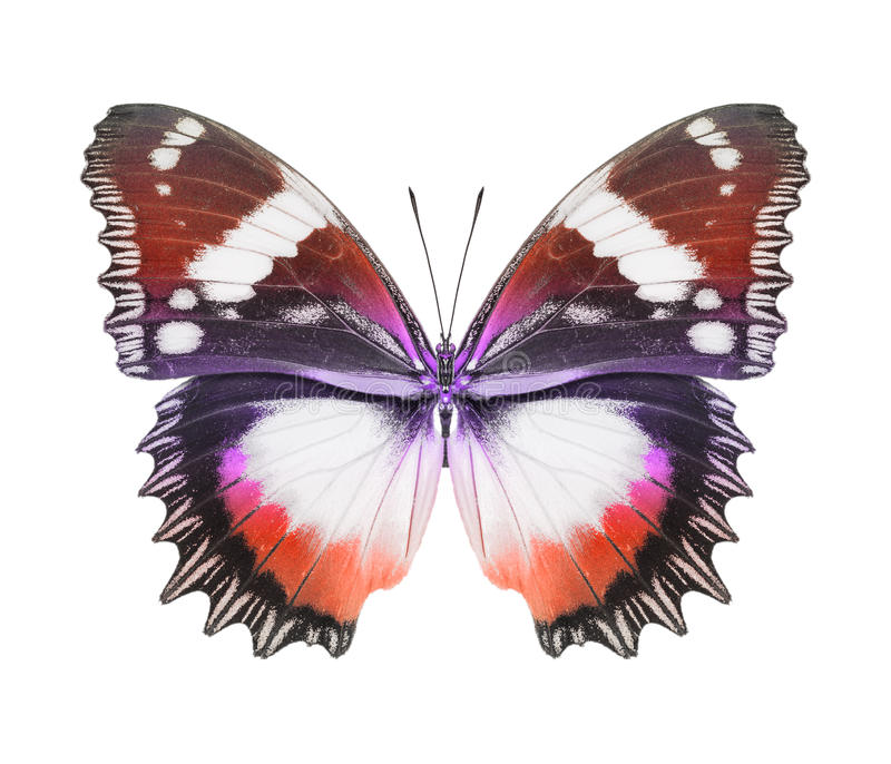 Orange rouge de papillon photo stock