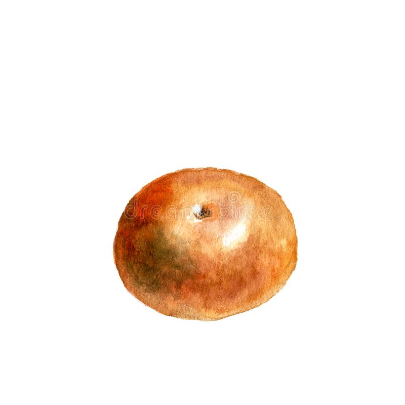 Orange round fruit isolated on white . Watercolor illustration. Orange round fruit isolated on white background. Watercolor illustration royalty free illustration