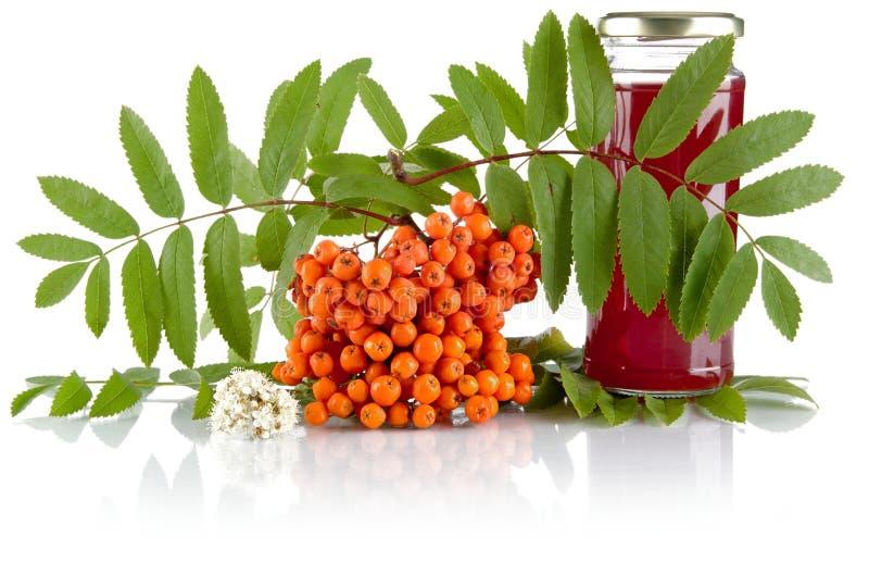 Orange rowanberry with jar of juice isolated on white background. Orange rowanberry with blossom, green leaves and jar of juice of rowanberry isolated on white royalty free stock images