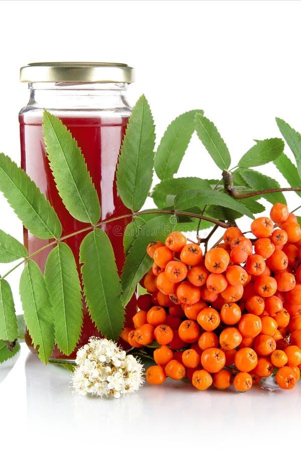 Orange rowanberry with jar of juice isolated on white. Orange rowanberry with blossom, green leaves and jar of juice of rowanberry isolated on white background royalty free stock photos