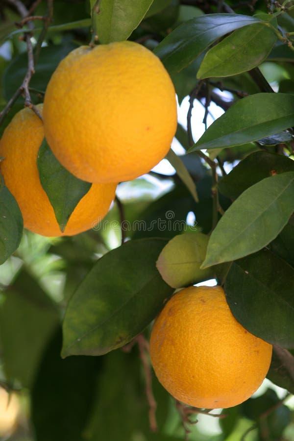 Orange S Stock Photo