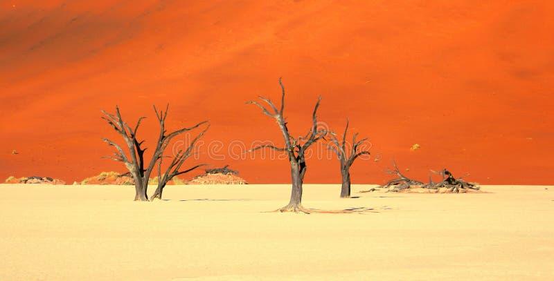 Orange Sanddünen und tote Bäume bei Deadvlei Namibia stockfotos