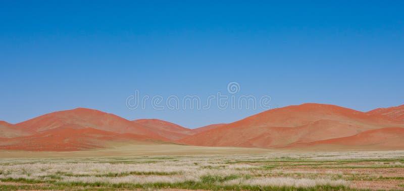 Orange Sanddyner på Sossusvlei Namibia royaltyfri foto