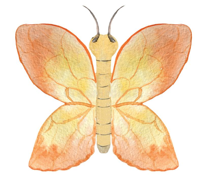 Orange Schmetterling auf einem weißen Hintergrund lizenzfreie abbildung