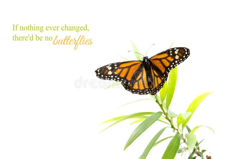 Orange Schmetterling auf einer Grünpflanze lokalisiert auf Weiß lizenzfreie stockfotos