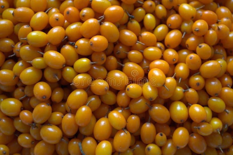 Orange sea buckthorn berries royalty free stock images