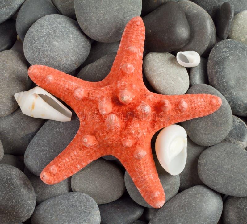 Orange sea star stock photo