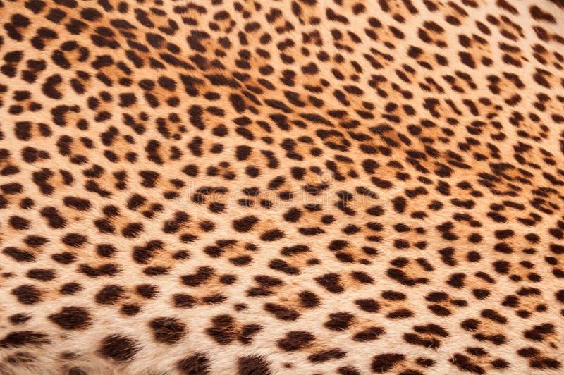 orange seamless hud för svart brun färgleopard royaltyfria foton