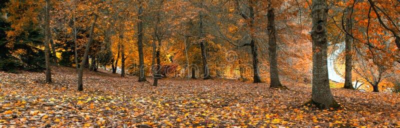 Download Orange Season stock photo. Image of rural, scenic, tourism - 30809420