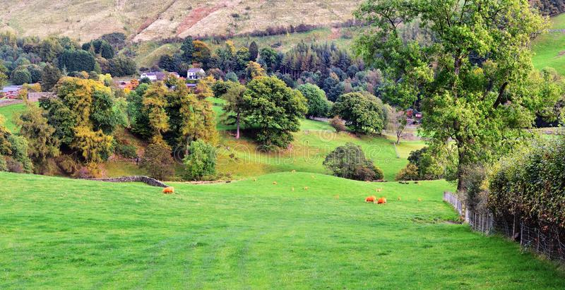 Download Orange Sheep In The Countryside Stock Image - Image: 83716003