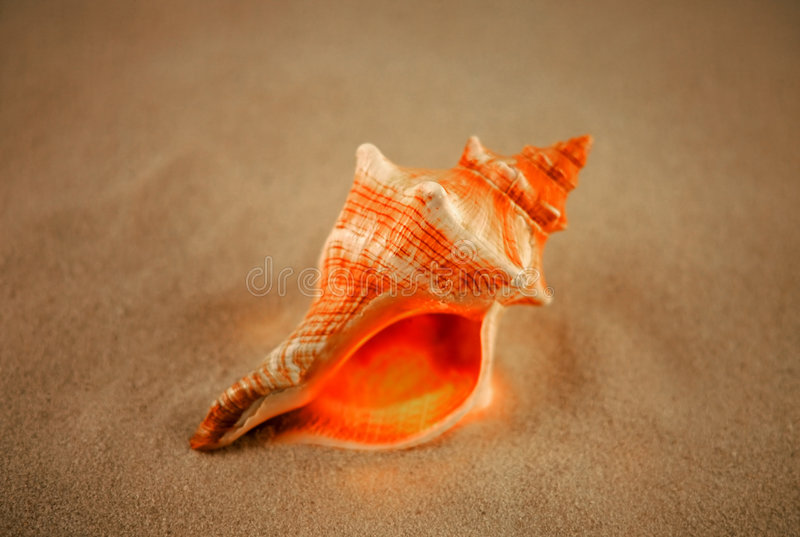 Orange Shell royalty free stock image