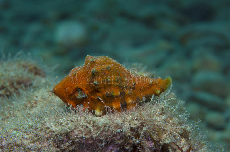 Orange shell. In search of food royalty free stock photos