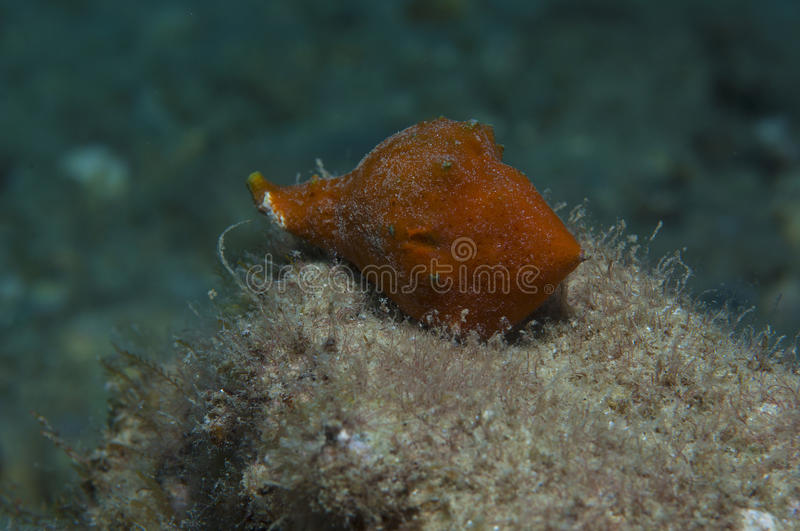 Orange shell. In search of food royalty free stock photo