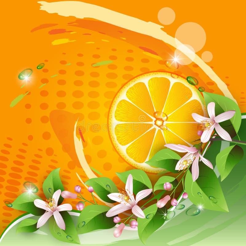 Orange skiva vektor illustrationer