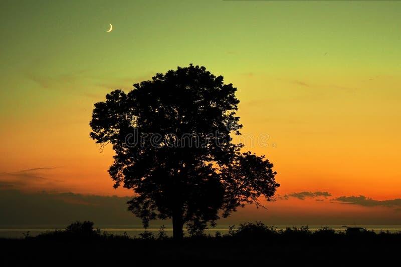 Moon set over sea stone coast and tree stock images