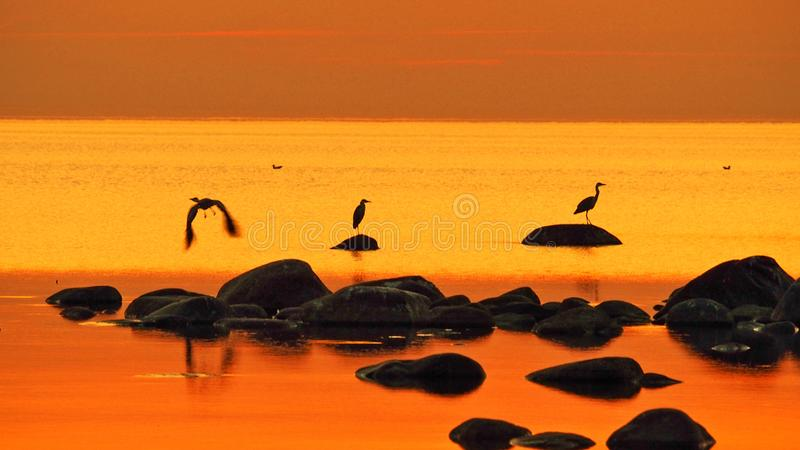 Orange sky and water after sunset stock images