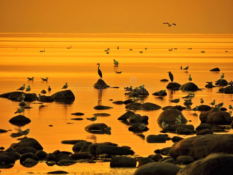 Orange sky and water after sunset royalty free stock photography