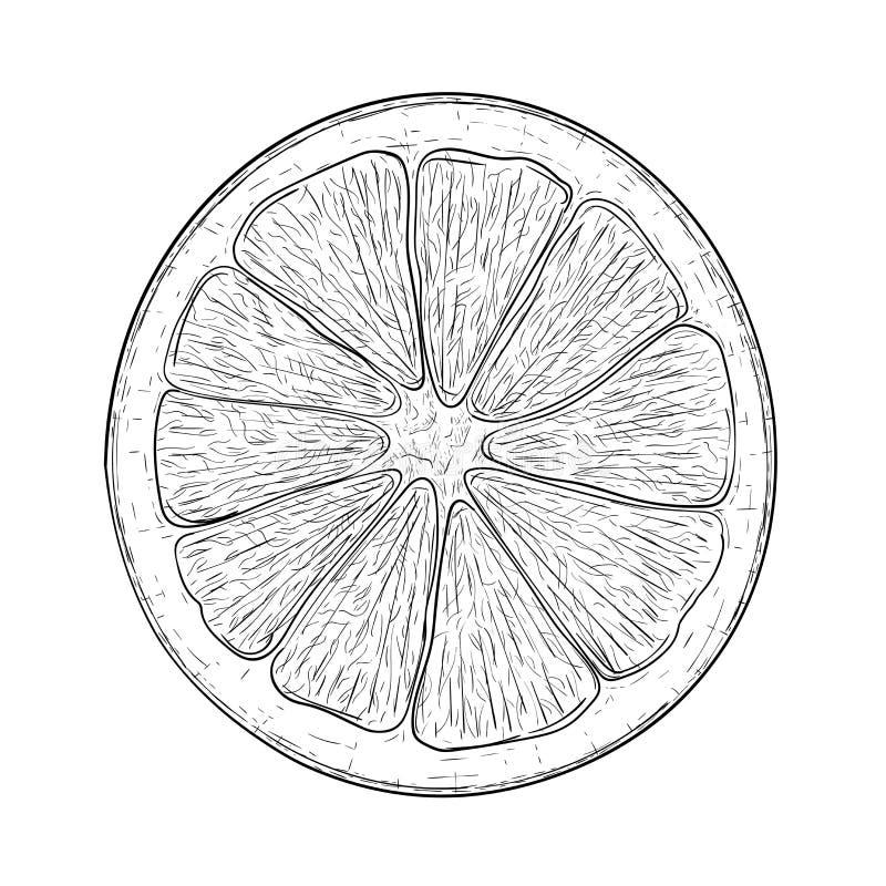 Free Orange Slice. Black And White Hand Drawn Sketch Stock Image - 114279941