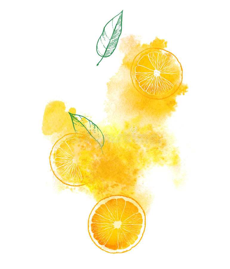 Orange slices and juicy splash on white background. Hand-painted watercolor illustration vector illustration