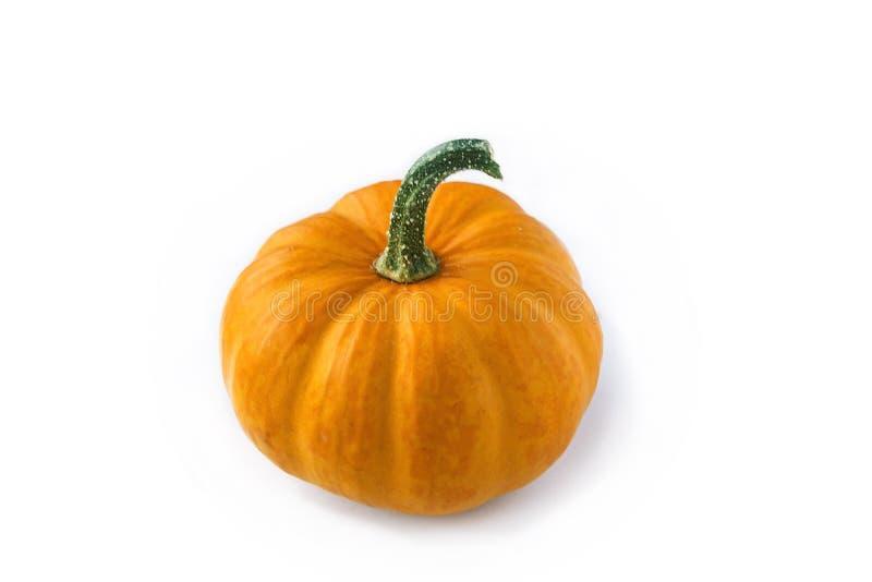 Orange small pumpkin isolated royalty free stock photos
