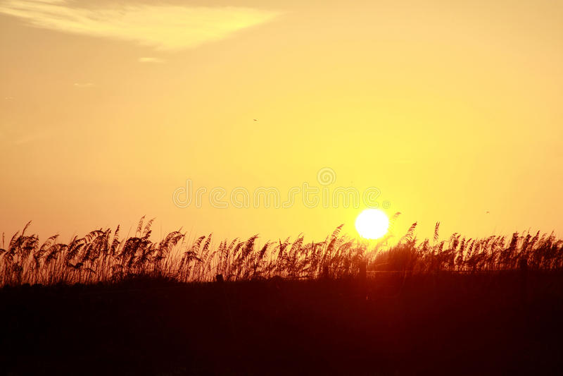 Orange solnedgång över dyn royaltyfri fotografi