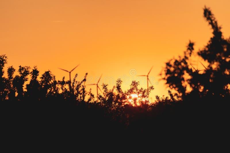 Orange solnedgång bland träd och väderkvarnar Magisk orange solnedgång runt om naturen och förnybara energikällor royaltyfri bild