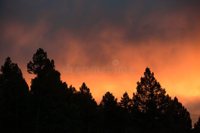 Orange solnedgång i trädkontur royaltyfri foto