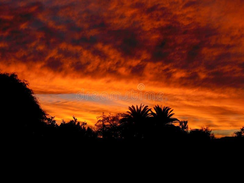 Orange solnedg?ng med palmtr?d royaltyfri fotografi