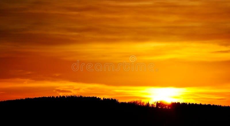 Orange Sonnenuntergangwald lizenzfreie stockfotos