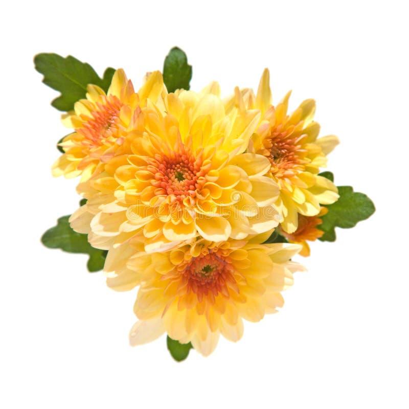 Free Orange Spray Garden Chrysanthemum Stock Photo - 6345540