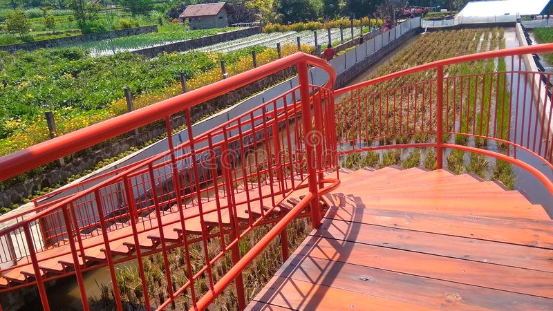 Orange stairs above the rice fields. Etnich royalty free stock photo