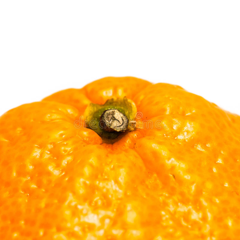 Orange Stalk Stock Image