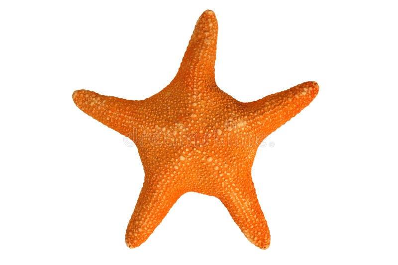 Download An orange starfish stock image. Image of animal, star - 2166995