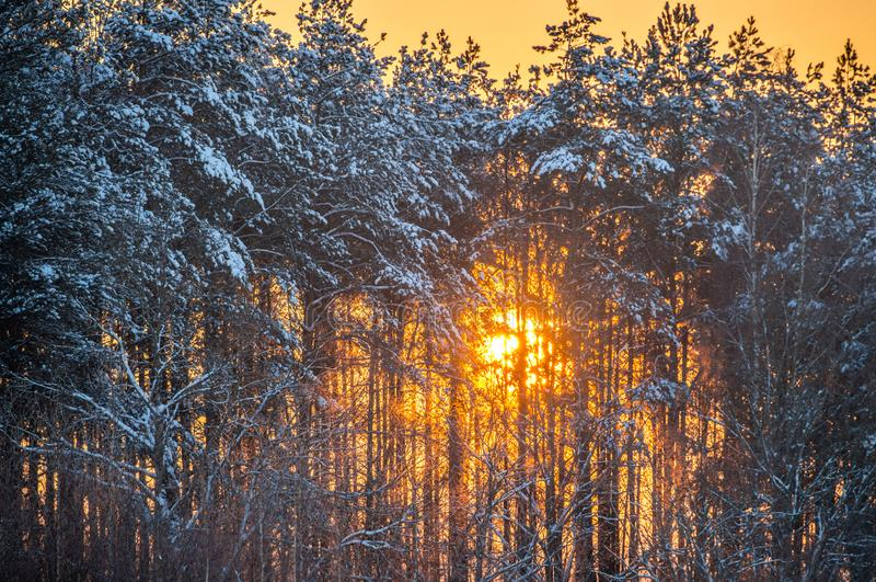 Sun shine through winter trees. Orange Sun shine through winter trees, winter landscape stock image