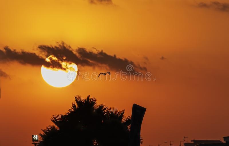 Orange sun at sunset semi covered by clouds. With palm silohuettes stock photos