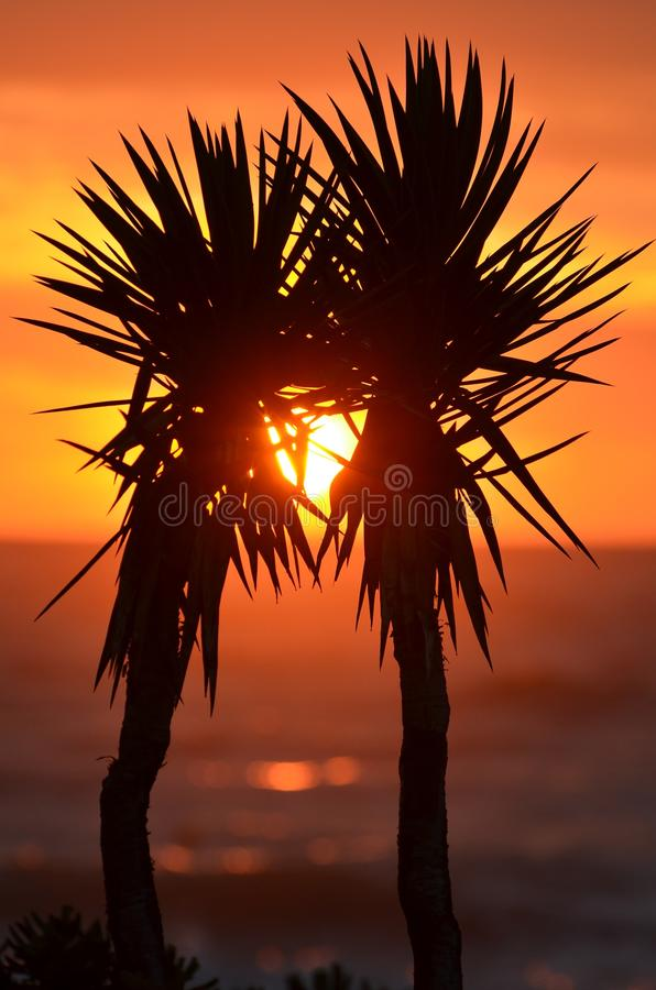Download Orange Sunset Between 2 Trees Beside A Body Of Water Stock Image - Image of photo, beach: 83024429