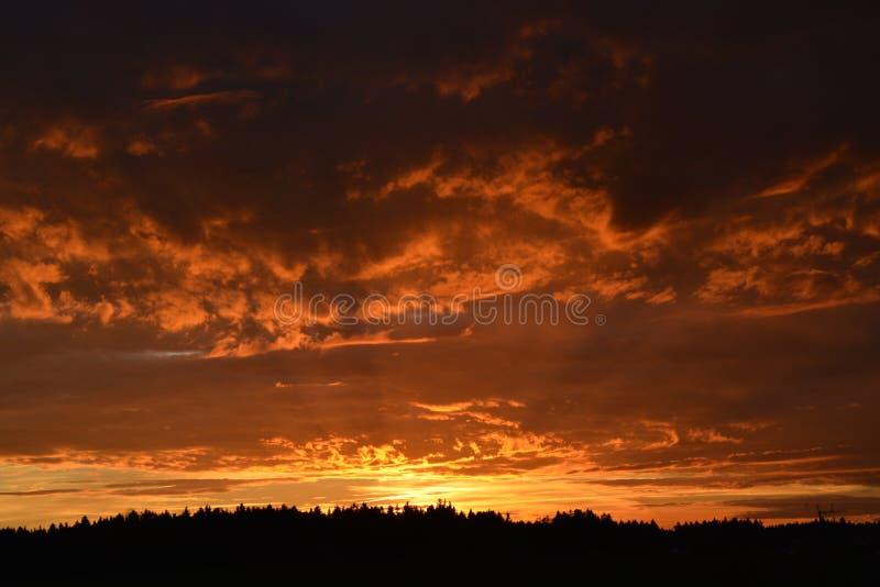 Orange sunset over dark forest stock photo