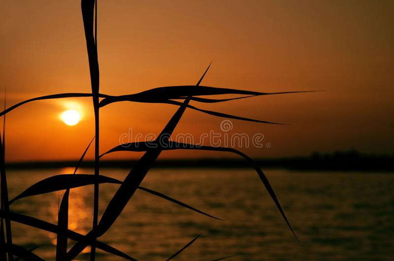 Orange sunset over water, the silhouette of the leaves of coastal grass and sun track background image royalty free stock image