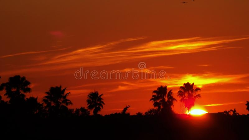 Orange Sunset With Palm Tree Silhouettes stock photos